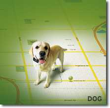 Zoombak GPS Locator for your dog
